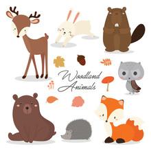 Cute  Woodland Animals Sticker