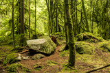 old forest with moss covered rocks and lycan's beard covered trees