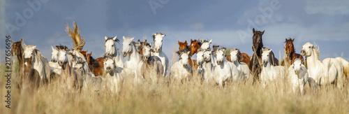 Welsh Pony - 217656696