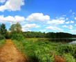 Panoramic image of a forest lake in summer.
