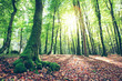 Summer forest with sun light. Nature background. - 217696430