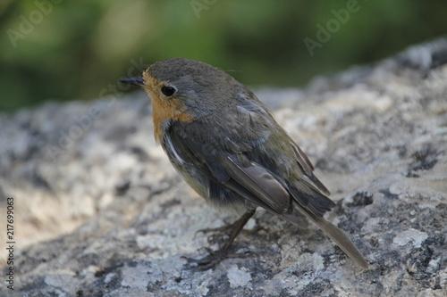 Foto Murales Pájaro