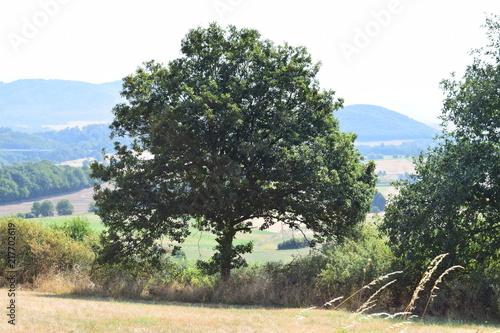 Aluminium Beige Eifellandschaft hinter Baum