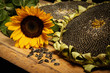 big and delicious sunflower on an old wooden table on a black background