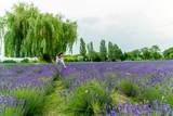 Paya im Lavendelfeld