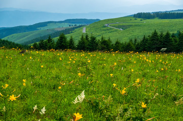 夏の霧ヶ峰高原