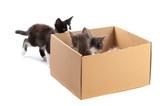 A small kitten looks in a cardboard box