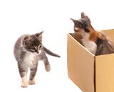 A little kitten looks out of a cardboard box