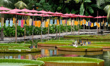 a beautiful bamboo bridge by the lotus pond
