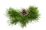 green pine branch isolated - 217718441