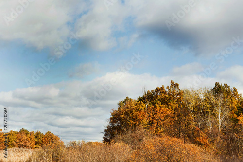 Plexiglas Berkenbos Fall landscape. Yellow trees and bushes against blue sky