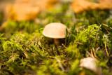 mushrooms growing in the autumn season