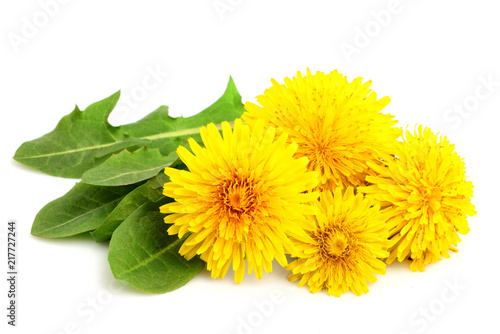 Dandelion flowers with leaves close-up. - 217727244