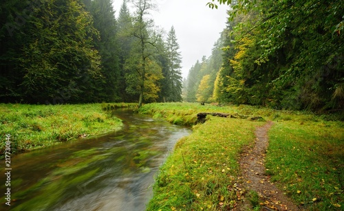 A beautifully river flowing autumn forest - 217730846