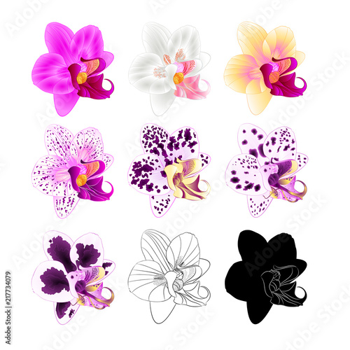 Orchid Phalaenopsis various colours natural, outline, silhouette,flower fifth on a white background vintage vector editable illustration hand draw - 217734079