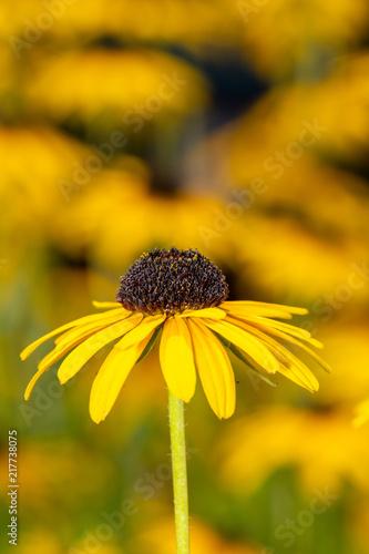 Foto Murales Closeup of a flower in the garden