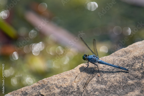 Foto Murales Dragonfly