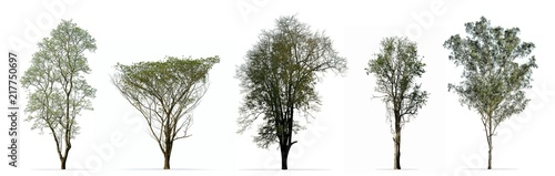 Collection of trees isolated on white background - 217750697