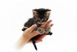 cute little kitten sitting on the palms 1