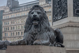 Statue of Lion on Trafalgar Square in London, United Kingdom.