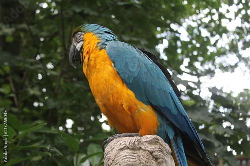 Aluminium Papegaai Parrot Side Profile
