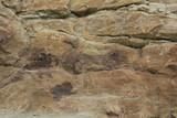 Dinosaurier Knochen Dinosaur Ridge Colorado USA