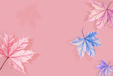 Multicolored maple leaves on a pink background. Blue, purple and pink shades. Creative natural autumn image. Free space for text.