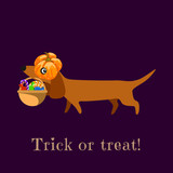 Dachshund in carries a pumpkin basket with sweets. The inscription Trick or Treat. Vector