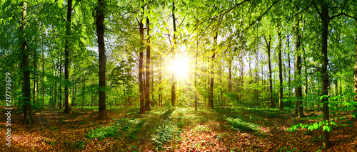 Beautiful forest in spring with bright sun shining through the trees - 217793679