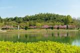 春爛漫の公園の情景 - 217800812