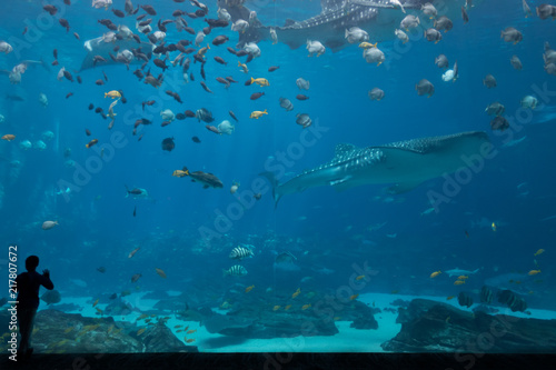Foto Murales One Child Silhouetted In Front of Whale Shark Tank