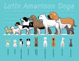 Latin American Dogs Size Comparison Set Cartoon Vector Illustration