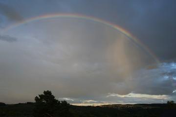 Rainbow-871