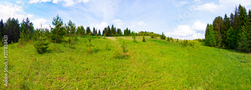 Panorama of a meadow with green grass and trees - 217838431