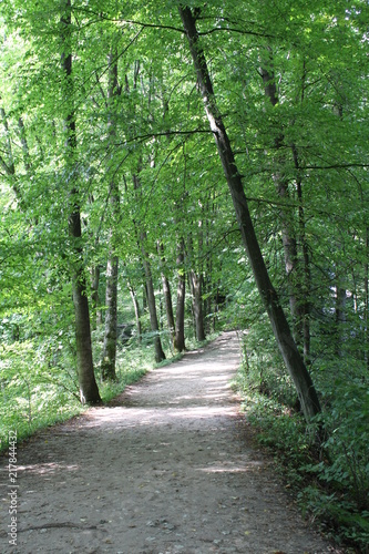 Plexiglas Weg in bos Forest