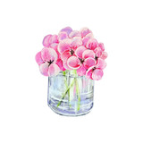 Glass jar with hydrangea flowers isolated on white background