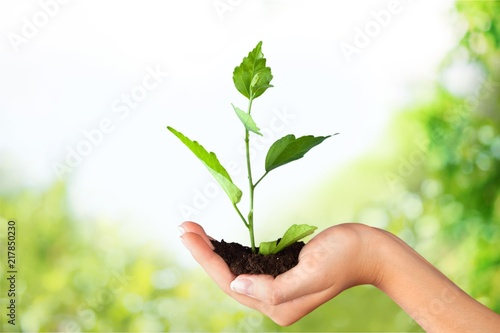 Foto Murales Green Growing Plant in Human Hand on beautiful natural