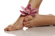 beautifully groomed female feet with orchid on a white background