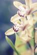 Orchid Macro Shot