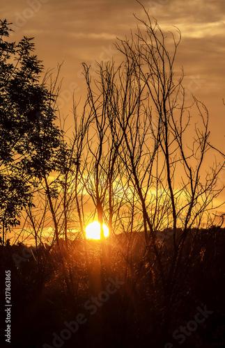 Fotobehang Bruin Sunrise through the tree's