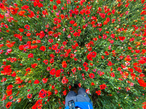 View from above on a red poppy flower field with a man with a camera in spring - 217864265