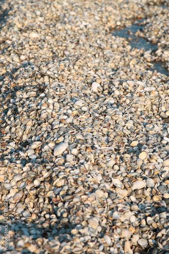 In de dag Stenen ракушки