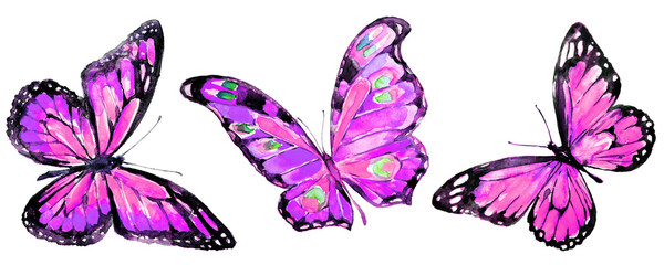 beautiful pink butterflies,watercolor,isolated on a white background © aboard