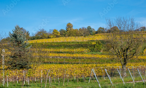 Aluminium Blauw Weinberg im Herbst
