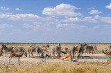 Group of animals at a water hole / Group of zebras and springboks at a waterhole in Etosha National Park.
