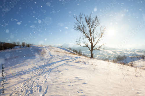 Foto Murales Winter mountain landscape. Snowy Alpine mountain hills at sunny day