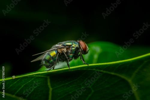 Foto Murales Fly in macro wallpaper