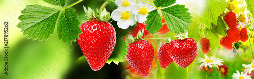 strawberries witch garden raspberries - 217895262