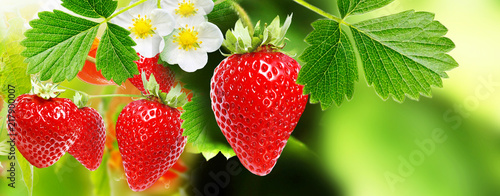 Fotobehang Natuur berry garden summer.strawberries
