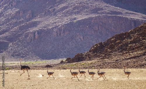Aluminium Beige Namibia